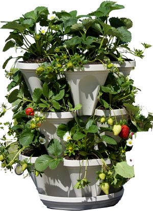 3 Tier Stackable Planter for Strawberries