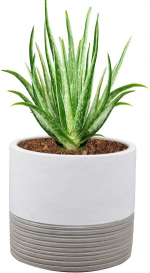 Aloe Vera Plant Planter Container with Drainage Hole