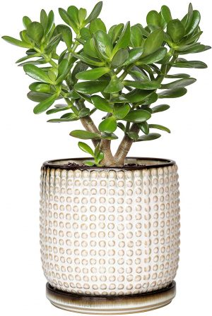 Beaded Stoneware Pot for Indoor Plants by D'vine Dev