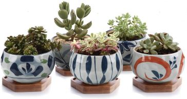 Japanese Style Ceramic Pot For Succulents