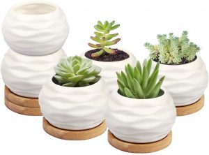 Succulent Plant Pot from ZOUTOG with Water Pattern