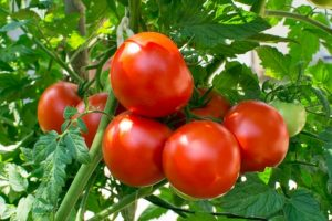 Top 7 Best Fertilizer For Tomatoes