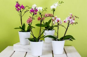 Top 7 Best Orchid Pots for Phalaenopsis